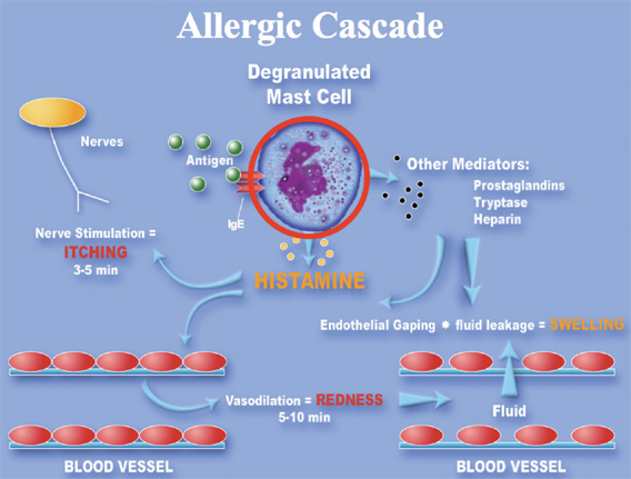 Allergy Reaction Chain IgE Antigens from Allergens found in Indoor Air